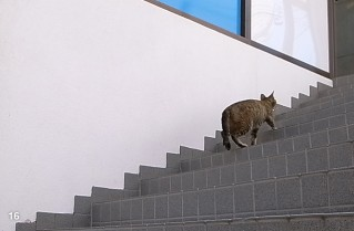 香林坊で出会ったかわいい猫さん