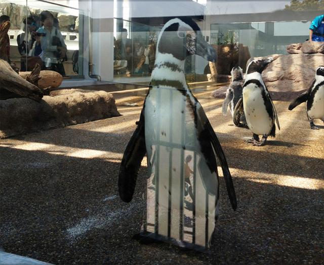 京都水族館 ペンギンモデル立ち。