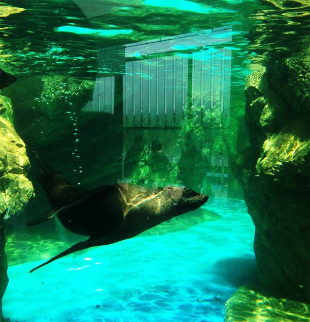 京都水族館 アザラシもいるよっ。