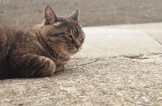 白浜の外猫さん