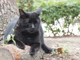 通称「キャットパーク」の猫もビターチョコ