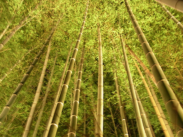 嵐山・花灯路~竹林~